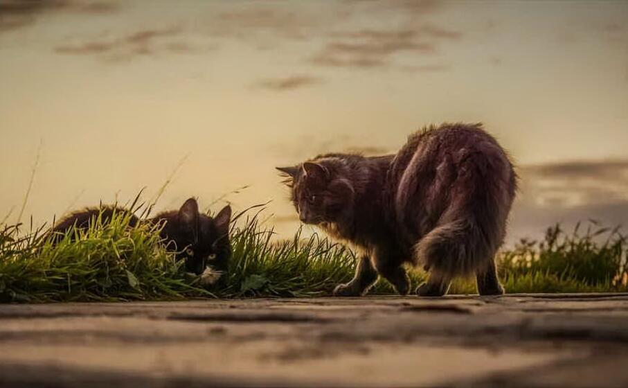 gatti (foto pixabay)