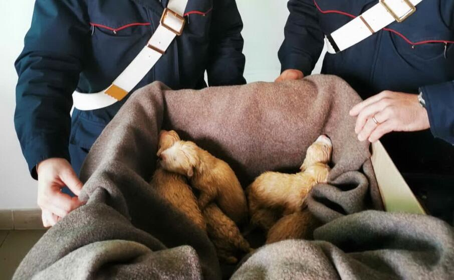 i cuccioli salvati (foto carabinieri)
