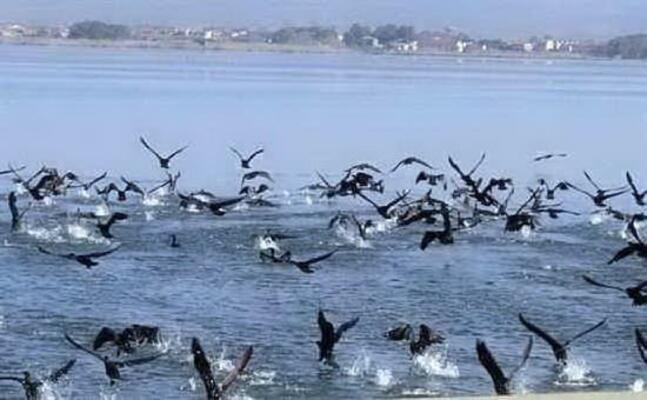 i cormorani (foto s pinna)