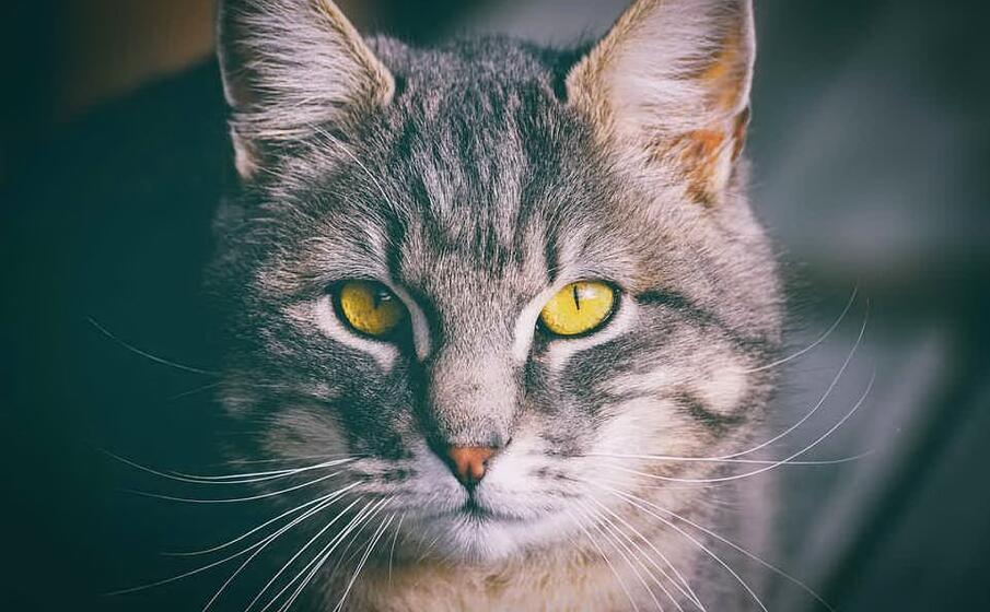 un gatto (foto pixabay)