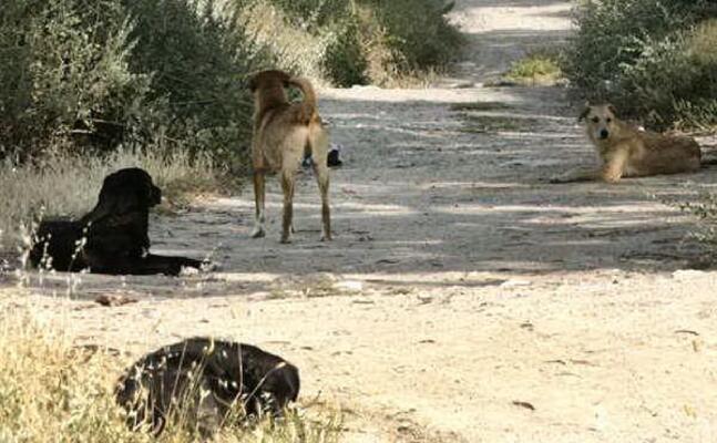 cani sul litorale quartese (foto archivio l unione sarda)