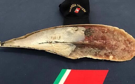 L'esemplare sequestrato (foto Guardia costiera)