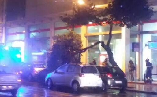 L'albero caduto sulle auto in sosta (Foto Vigili del fuoco)