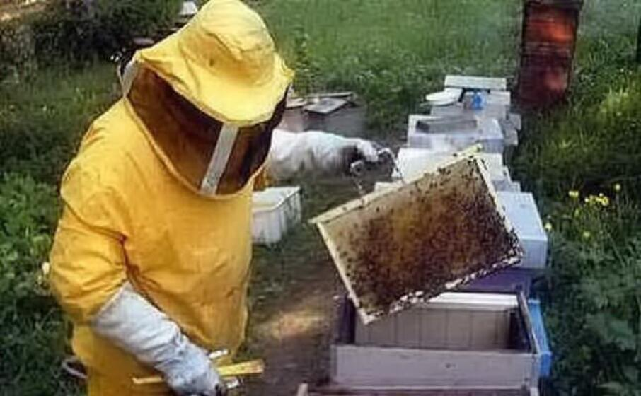 un apicoltore (archivio l unione sarda)