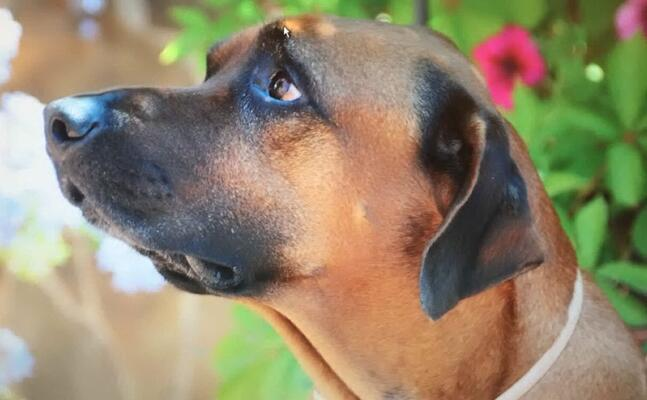 la paura negli occhi del cane