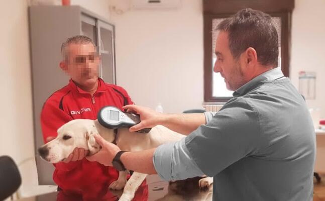 la microcippatura di un cane (foto e sanna)