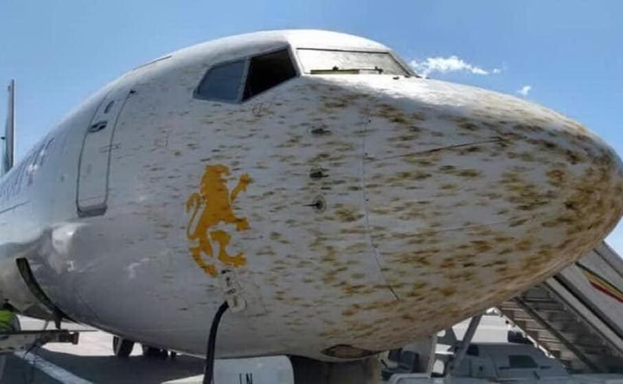 il muso dell aereo dopo l urto con lo sciame (foto aeronews facebook)