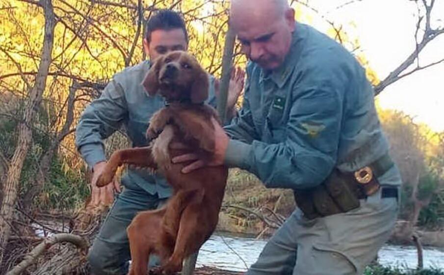 il cane salvato dalla forestale (foto e sanna)
