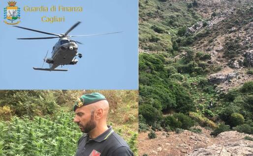 La piantagione sul monte Serpeddì (Foto Gdf)