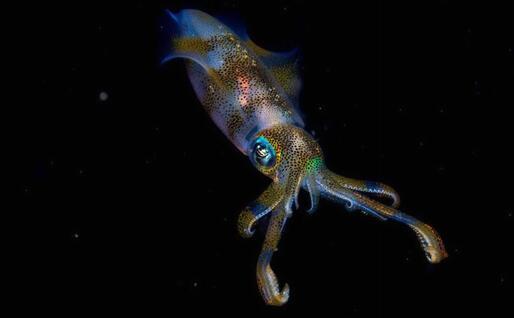«Night glow» di Cruz Erdmann, Nuova Zelanda, ha vinto il premio nella categoria 11-14 anni.