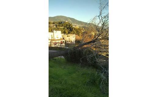 Un albero sradicato a Lanusei (foto Giovanna Falchetto)