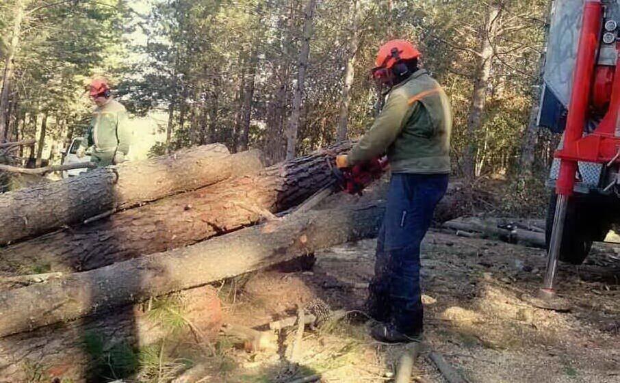 lavoratori dell agenzia forestas (archivio l unione sarda)