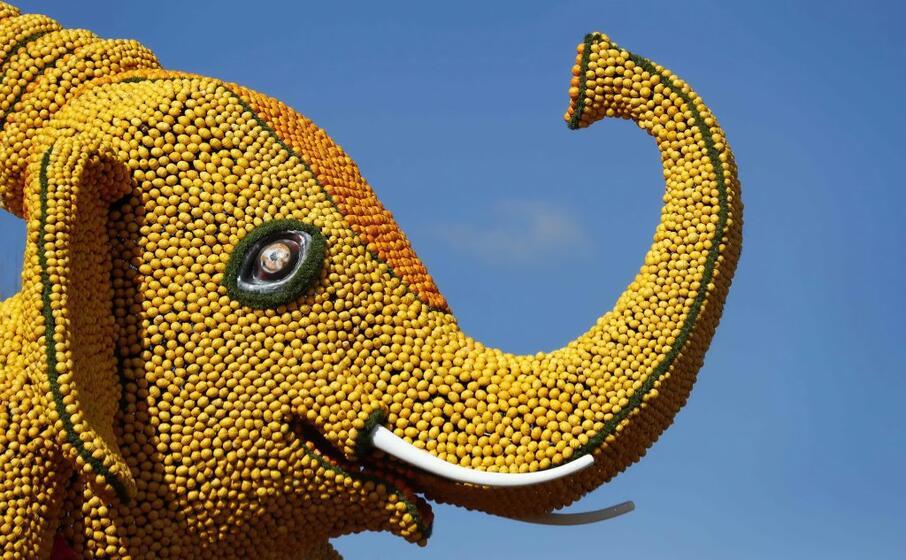 sculture fatte di agrumi sfilano alla festa di mentone