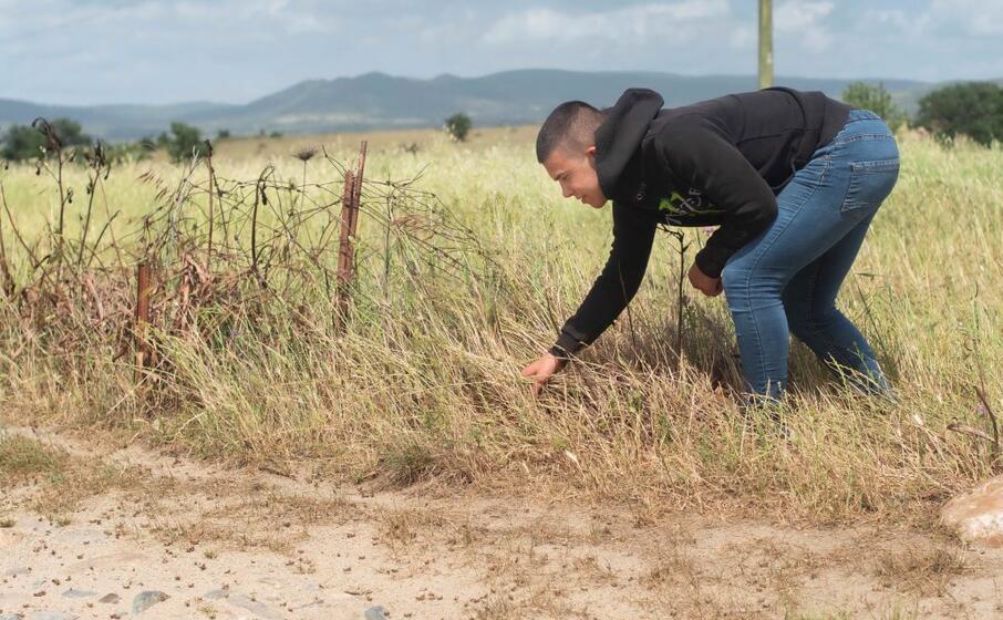 giovane agricoltore tra i campi invasi dalle cavallette (l unione sarda m melis)