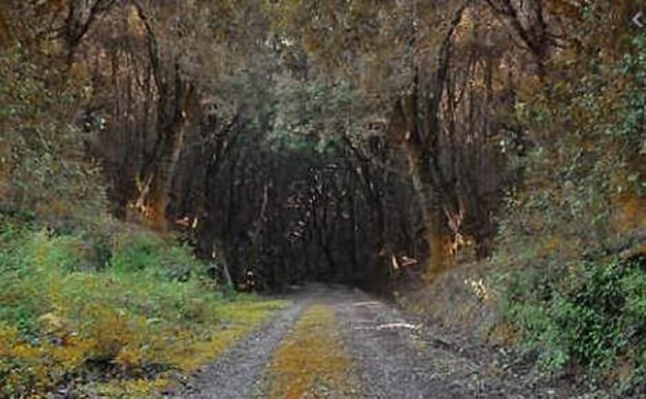 la foresta di marganai (l unione sarda)