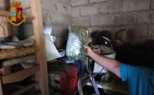 la marijuana trovata a guasila (foto questura)