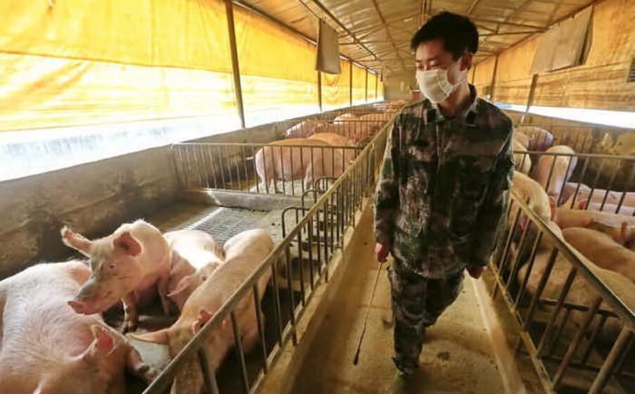 Cina, scoperto nuovo virus