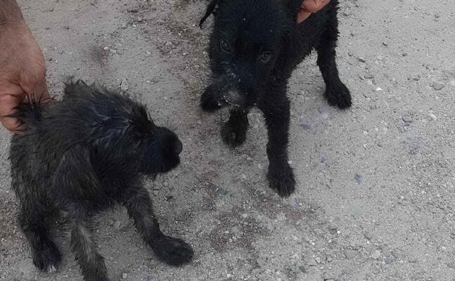 i cagnolini salvati (foto pinna)