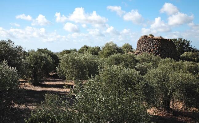 il complesso archelogico di santa barbara de turre (foto pala)