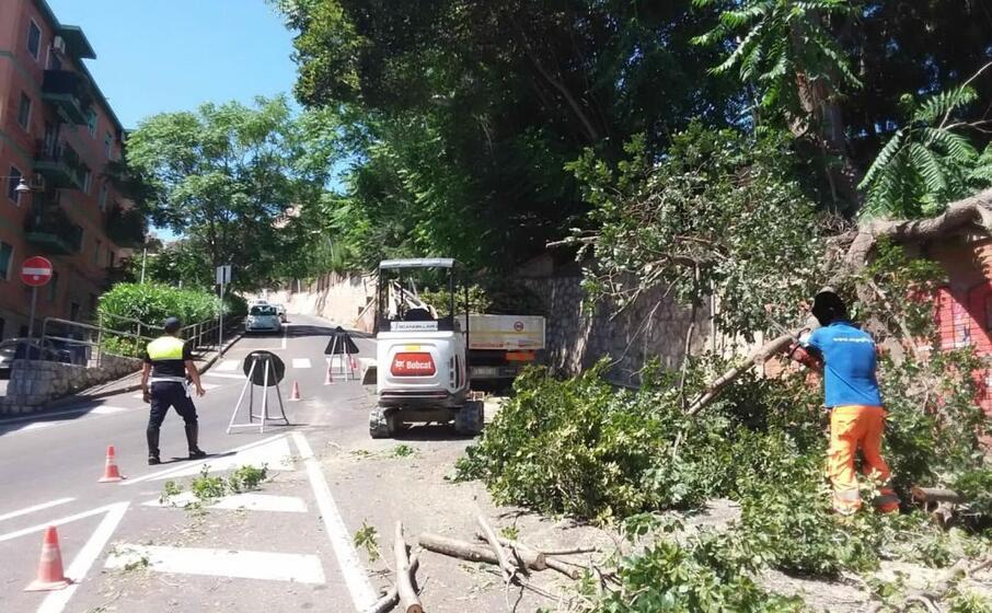 il ramo crollato (foto polizia municipale)
