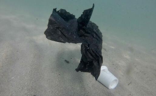 Resti di buste e bicchieri sott'acqua al Poetto (L'Unione Sarda)