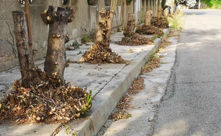 il viale alberato (foto inviata dal lettore)