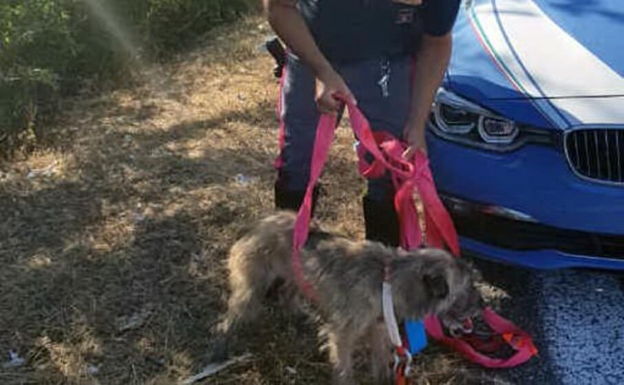 la polizia stradale di laconi e il cane salvato (foto l unione sarda pintori)