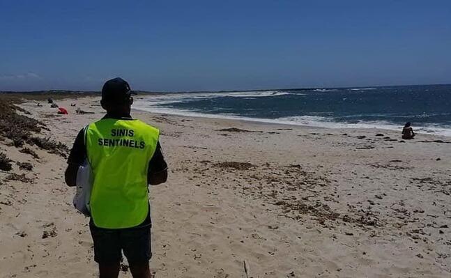 una sentinella lungo la costa del sinis (foto s pinna)