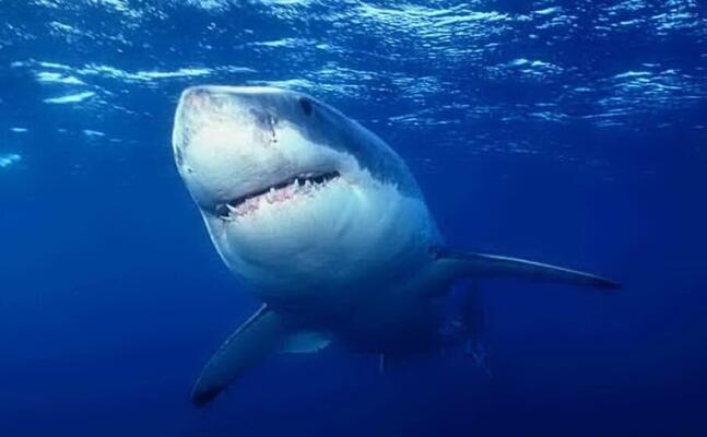 uno squalo (archivio l unione sarda)