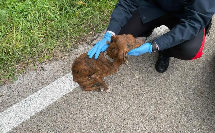 il cane salvato (foto carabinieri)