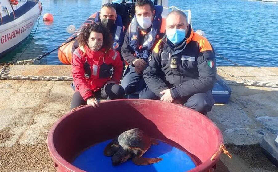 la tartaruga (foto concessa)