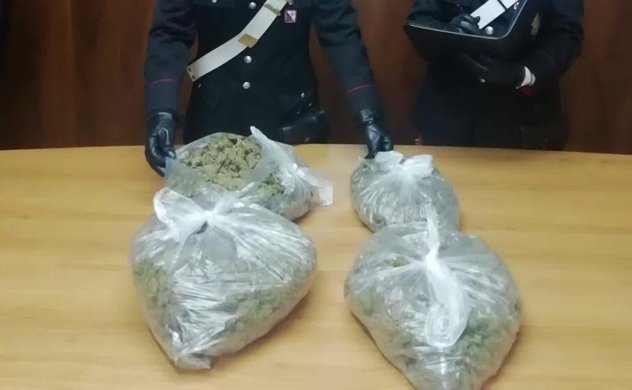 la marijuana (foto carabinieri)