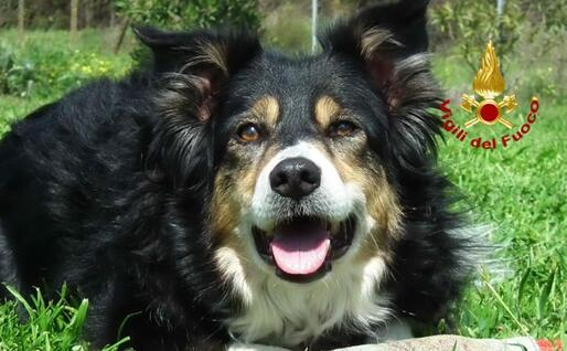 La cagnolina Kira (foto Vigili del fuoco)