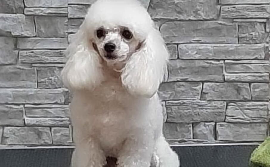 la cagnolina glicy (ansa)