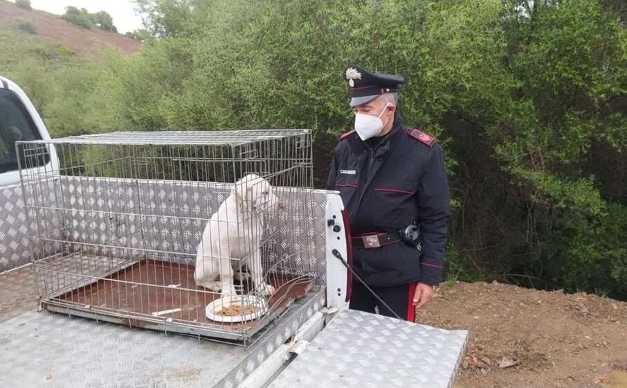 il cucciolo salvato dai carabinieri (foto carabinieri)